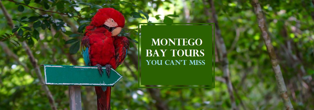 Montego Bay Jamaica Tours