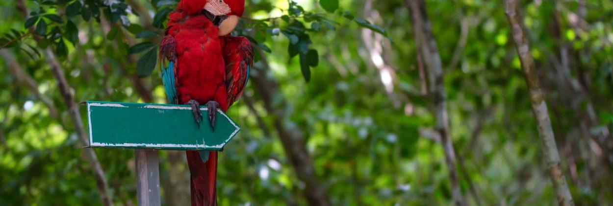Exotic wildlife in Jamaica